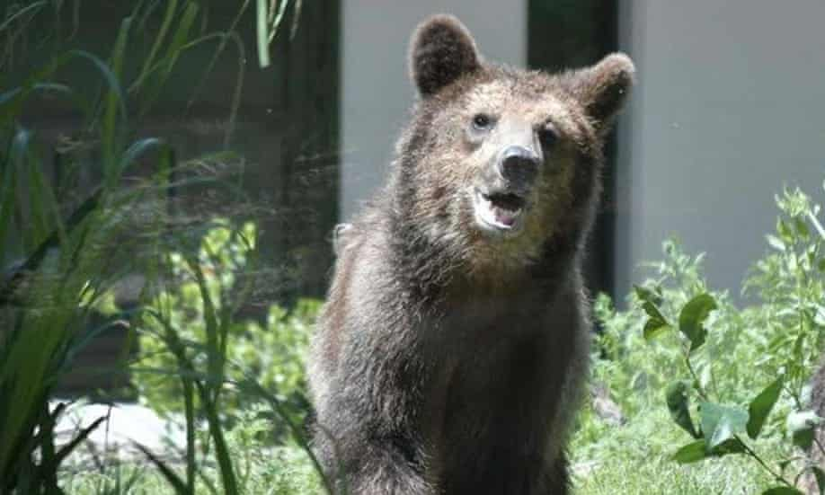 Italian police officer describes how he was injured in bear attack
